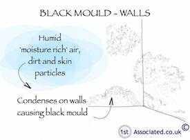 Black mould_wall