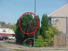 all-you-ever-wanted-to-know-about-trees