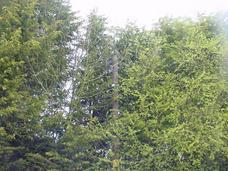 tree-problems-in-nutshell
